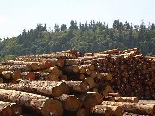 米国通商代表部カナダ産木材の輸入関税の増税を示唆 さらなるインフレと木材価格高騰懸念